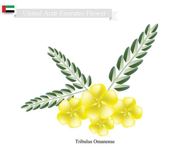 UAE National Flower